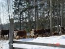 Z wizytą u Finów 2006 r.